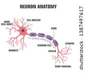 vector scientific icon neuron... | Shutterstock .eps vector #1387497617