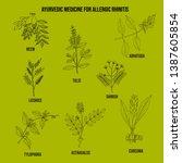 best ayurvedic herbs for...   Shutterstock .eps vector #1387605854