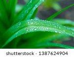 background of flower leaves... | Shutterstock . vector #1387624904