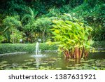 tropical pond and palm trees.... | Shutterstock . vector #1387631921