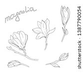 hand drawn magnolia flower with ... | Shutterstock .eps vector #1387790054