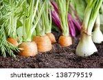 Many Fresh Organic Vegetables...