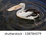 australian pelican on the water ... | Shutterstock . vector #138784379