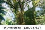 beautiful  massive jungle tree  ... | Shutterstock . vector #1387957694