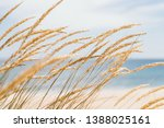 Dune Grass Sea Landscape....