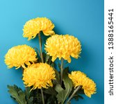 Yellow Chrysanthemum Flowers On ...
