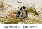 penguin stays in the grass | Shutterstock . vector #138822671