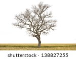 Dead Tree Isolated At Field On...