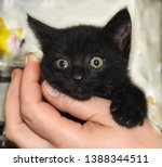 Stock photo gorgeous black kitten at the age of month born a street cat in a garage box during the photo 1388344511