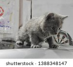 Stock photo gorgeous ash gray kitten at the age of month born a street cat in a garage box during the photo 1388348147