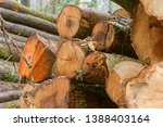 felled trees in the forest ... | Shutterstock . vector #1388403164