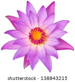 Stock photo close up blooming water lily or lotus flower isolated on white with path 138843215