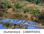 samaba rice terrace fields in... | Shutterstock . vector #1388493041