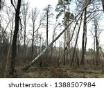 the old tree fell and brought... | Shutterstock . vector #1388507984