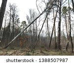 the old tree fell and brought... | Shutterstock . vector #1388507987