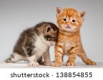 Stock photo two funny playful little red hair kittens playing with each other 138854855