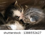 Stock photo little striped wild kittens two weeks the kittens are not able to walk 1388552627