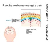 protective membranes covering...   Shutterstock .eps vector #1388570501