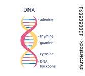 dna helix molecule spiral... | Shutterstock .eps vector #1388585891