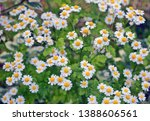 summer field with daisies and... | Shutterstock . vector #1388606561