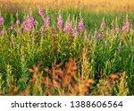 abundance of blooming wild... | Shutterstock . vector #1388606564