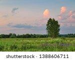 lonely tree in summer field... | Shutterstock . vector #1388606711