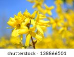 yellow blossoms | Shutterstock . vector #138866501