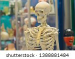 model of the human skeleton as... | Shutterstock . vector #1388881484