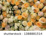 carpet of beautiful cream... | Shutterstock . vector #1388881514