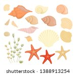 Set Of Shells. Summer Concept...