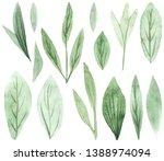 hand drawn watercolor delicate... | Shutterstock . vector #1388974094
