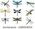 vector  isolated  insects... | Shutterstock .eps vector #1389005024