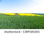 green wheat fields.... | Shutterstock . vector #1389181601
