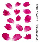 Stock photo peony petals isolated on white background closeup 1389194831