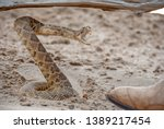Coiled Rattlesnake In Sand By...
