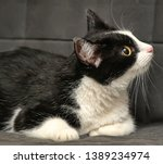 Cross  Eyed Funny Cat Close