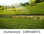 tea plantation with clear sky... | Shutterstock . vector #1389268571