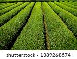 tea plantation in shizuoka ... | Shutterstock . vector #1389268574