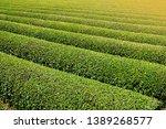 tea plantation in shizuoka ... | Shutterstock . vector #1389268577