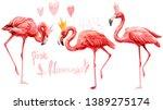 Set Of Cute Pink Flamingo Bird...