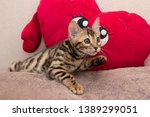 Stock photo bengal kitten playing in the background 1389299051