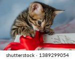 Stock photo bengal kitten playing in the background 1389299054