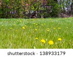 field of spring flowers and...   Shutterstock . vector #138933179