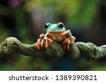 Flying Frog On Branch ...
