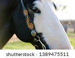 horse head closeup on rural... | Shutterstock . vector #1389475511