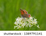 small brown butterfly sitting... | Shutterstock . vector #1389791141