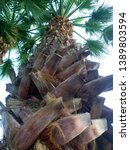 Brown Palm Tree Trunk Or Bark....