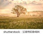 Amazing Nature Landscape With...