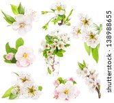 Collection Of Spring Flowers O...