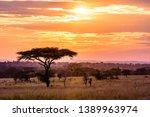 Sunset In Savannah Of Africa...